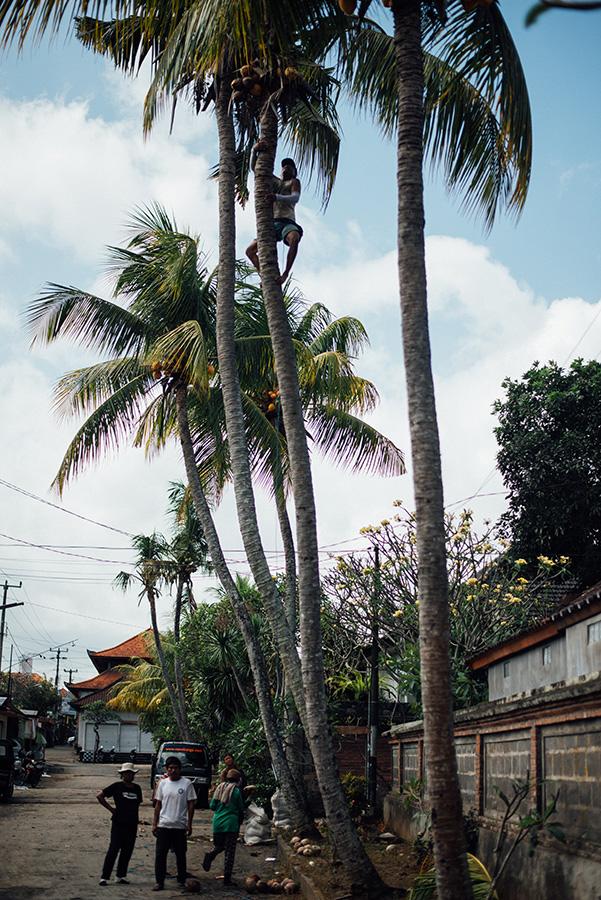 Bali-654
