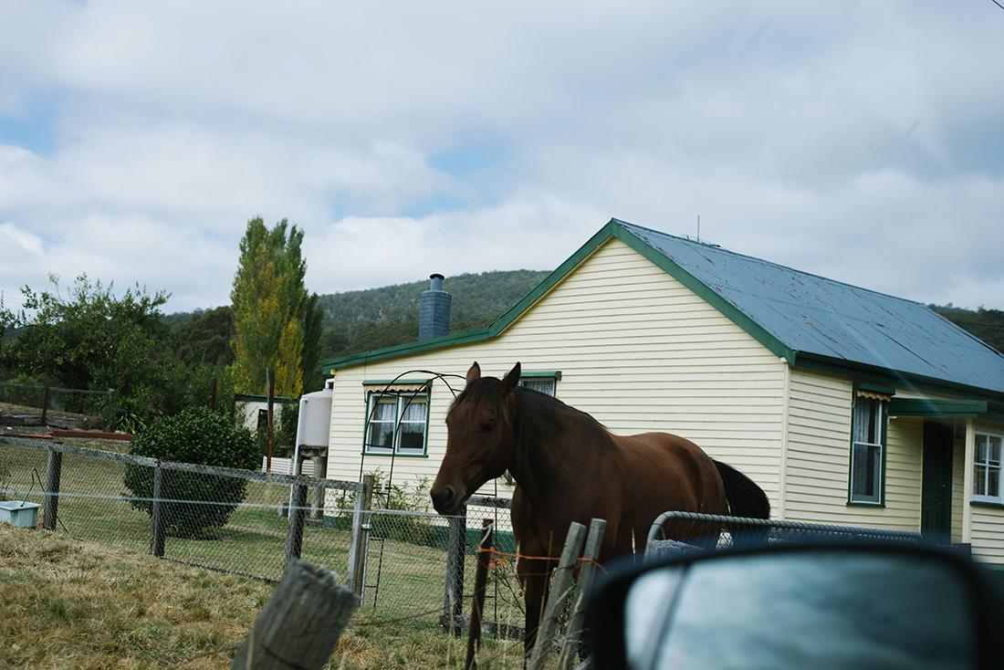 5.Tasmania-7
